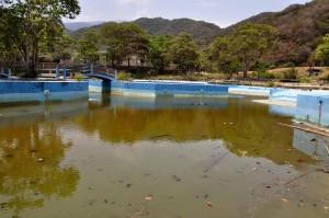 La flamante piscina del Centro Turístico Ciudad Los Caracas, un modelo construido en tiempos de la otra dictadura, la del general Marcos Pérez Jiménez que, en medio de tanto populismo, ha estado en los planes de refacción de todos los ministros de los últimos 16 años de revolución. Cabañas, restaurantes, piscinas, playas. Todo en el abandono más penoso. La piscina de la foto muestra un verde espectacular